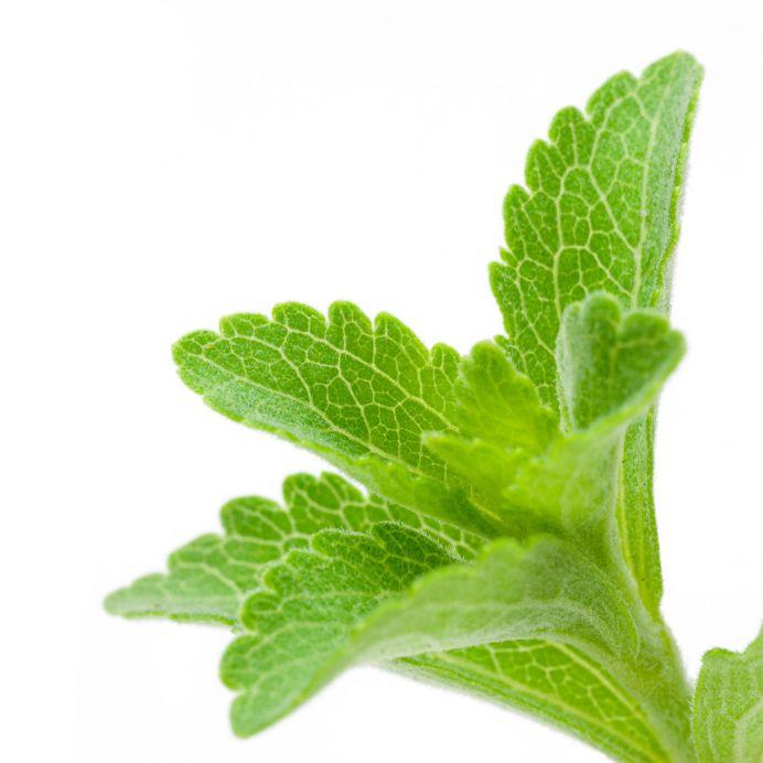 stevia farligt